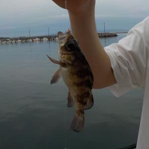 2021/07/03 東二見港 泳がせ釣り