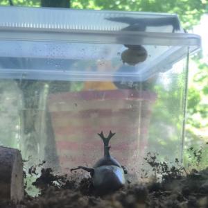 カブトムシとカタツムリ。