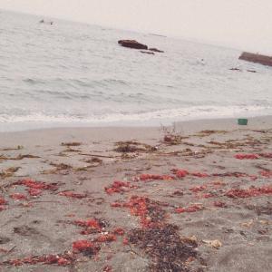 海沿いの散歩と気持ちのリセット*