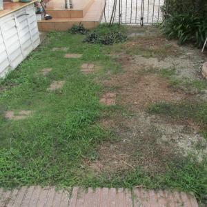 庭は緑だらけ!