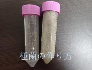 【家庭できのこ栽培】種菌の作り方(材料、方法、注意もあるよ)