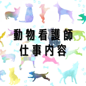 現役動物看護師が動物病院の仕事内容をお教えします!