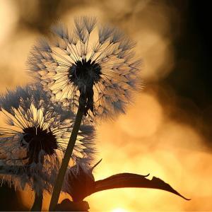 美しさは自分の心との対話から作られる―無理に気分を上げる必要はない。