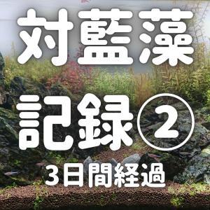対藍藻記録②~3日間経過~