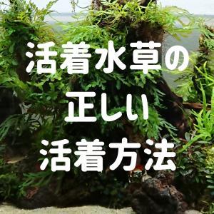 活着水草の正しい活着方法