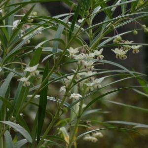 名前を忘れた白い花