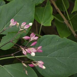 この花の名もわかりません。(もう一枚!!)