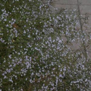 小さな花がいっぱい( 名前はわかりません )