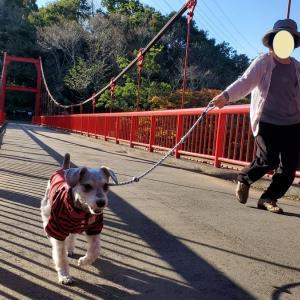 """""""泉自然公園""""  わんことおでかけin千葉 2020年10月25日③"""