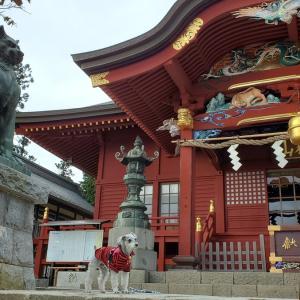 """""""武蔵御嶽神社""""  わんことおでかけin東京 2020年11月20日①"""