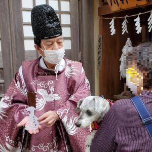 """""""武蔵御嶽神社""""  わんことおでかけin東京 2020年11月20日②"""