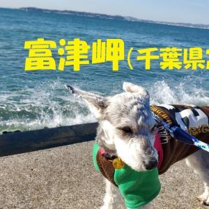 ❝富津岬(後編)❞ わんことおでかけin千葉  2021年2月23日②