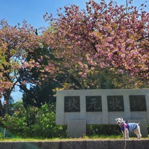 ❝千葉県長柄町 秋元牧場 (前編)❞ 愛犬とおでかけ-千葉県観光🎵    2021年4月11日