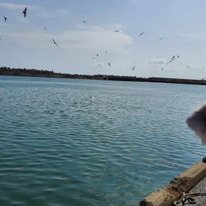 ❝銚子港で釣り🎣②❞ 愛犬とおでかけ-千葉県観光🎵  2021年3月20日②
