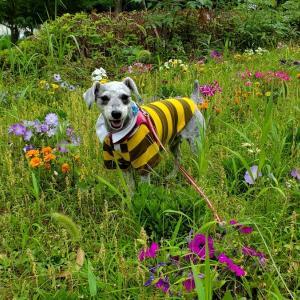 ❝公園にキレイなお花が咲いていました🌼 6月26日❞