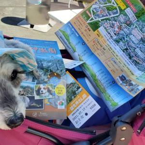 ❝鬼押出し園(チケット購入編)❞   愛犬とおでかけ-群馬県観光🎵  2021年7月17日⑦