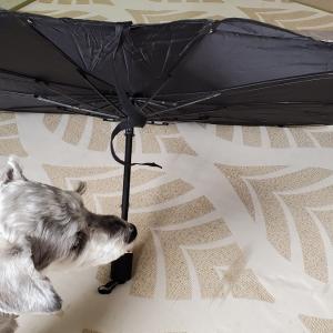 ❝ 折り畳み式 傘型 車用サンシェード ❞