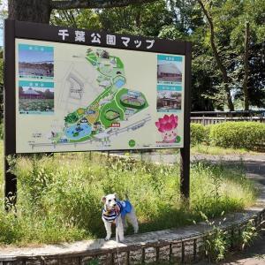 ❝千葉公園でボランティア活動❞