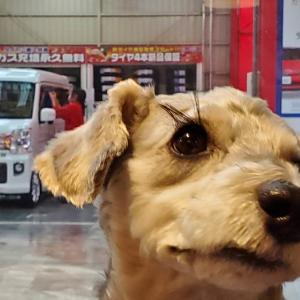 ❝コバックで洗車🚘❞