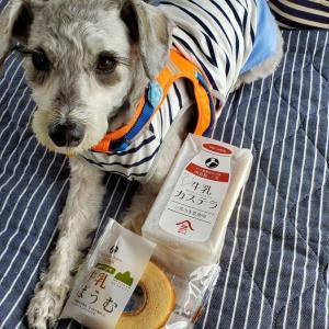 道の駅《 三芳村 鄙の里 》 愛犬とおでかけ-千葉県観光🎵 2021年5月1日⑥