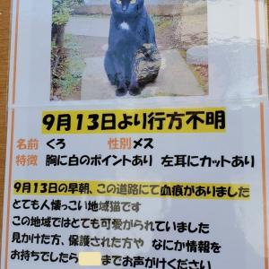 ❝行方不明の地域猫❞