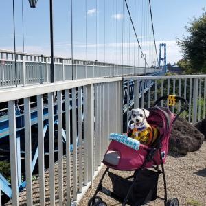 ❝ 竜神大吊橋 (前編)❞ 愛犬とおでかけ-茨城県観光🎵 2021年10月8日②