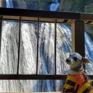 ❝ 袋田の滝(前編) ❞ 愛犬とおでかけ-茨城県観光🎵 2021年10月8日④