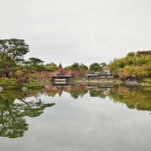【東京秋散歩】広大な敷地に色んな紅葉楽しめる昭和記念公園を散歩しよう!