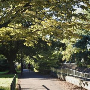 【東京休日散歩】平日の疲れ癒される和田堀公園・善福寺川緑地を散歩しよう!