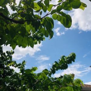 庭のオーキッド 大学お受験日記➂
