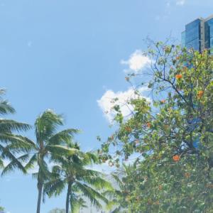 再挑戦!ハワイ失業保険コールセンターと古本アートに中華蒸しパン
