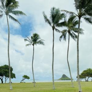 ハワイ失業保険