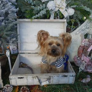 犬のイベント~ヨーキーフェス 2020~