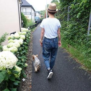 ヨーキー椛の日常~散歩の途中でビビる! 2021年6月~