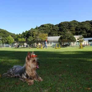 犬とお出かけ~HAMA&WAN 静岡県浜松市~