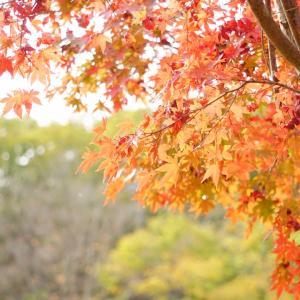秋探し( ˘͈ ᵕ ˘͈  )✧︎*。