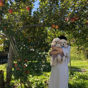 来たよ!!この季節恒例のりんご狩りと束の間のお散歩