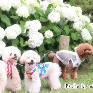 笑顔いっぱいのfamilyと紫陽花祭りへ(*´ `*)