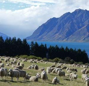 ニュージーランドでFX 2020年11月第4週