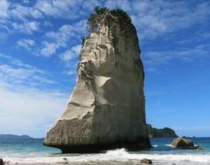 ニュージーランドでFX 2020年12月第1週