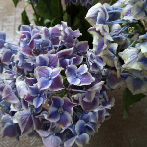 晴れの日 紫陽花