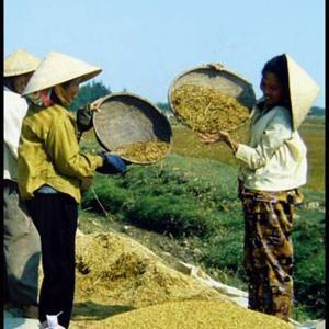 870 一枚の写真 _174 農作業