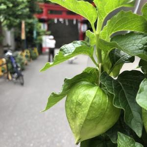 東京の初夏の風物詩 念願のほおずき市に行ってきました★
