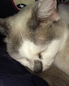 猫のおやつ(体調への影響考える)