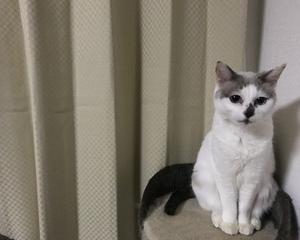 猫 室内飼いのメリット・デメリット~お悩みの方へ~