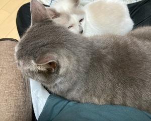 膝に乗る猫は何を思う