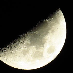 今日は上弦の月