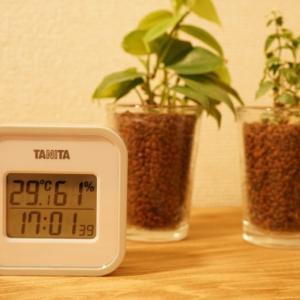 タニタの温湿度計(TT-558)をテレワークのために購入【レビュー】