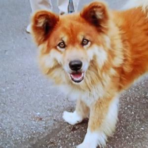 10年前ぐらいの飼い犬 あゆ