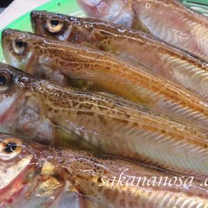 ハタハタ 美味しさでいうと最高レベルの底曳魚 秋冬の魚介類
